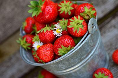 Erdbeerzeit auf dem Schwartenberg