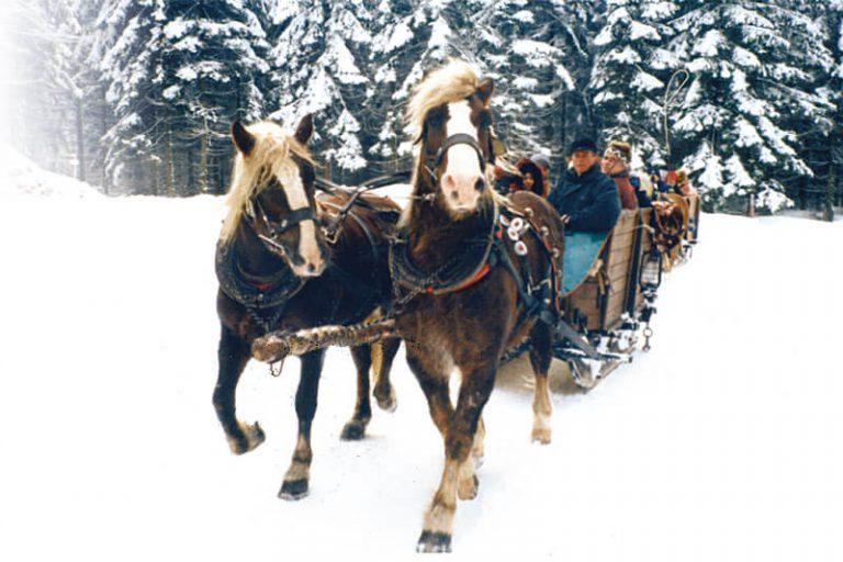 Winterlicher Schwartenberg mit Pferdeschlittenfahrt
